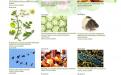 Электронная биологическая библиотека бесплатная
