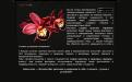 Сайт салона красоты в Днепропетровске